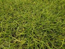 Den fulla ramen av tunna gröna sidor planterar bakgrund Arkivfoton