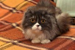 den gå i ax katten lop arkivfoton