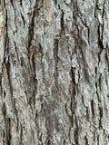 Den gamla bakgrunden för trädstam arkivfoto
