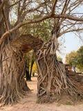 Den gamla bakgrunden för trädstam arkivbilder