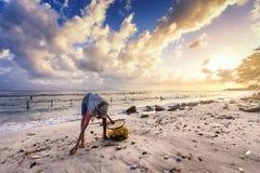 Den gamla fattiga kvinnan väljer upp havsväxt längs stranden royaltyfri fotografi