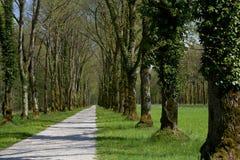 Den gamla gångallén, Bayern Fotografering för Bildbyråer