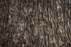 Den gamla hårda träskälltexturbakgrunden Arkivfoto