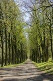 Den gamla historiska kastanjebruna gränden i Chotebor under vårsäsong, träd ror itu, den romantiska platsen arkivbild