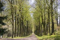 Den gamla historiska kastanjebruna gränden i Chotebor under vårsäsong, träd ror itu, den romantiska platsen royaltyfri bild