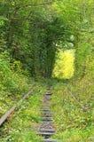 Den gamla järnväg linjen är i tunnelen av träd Tunnel av förälskelse - underbart ställe som av naturen skapas Klevan Rivnenskaya  Arkivfoto