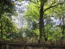 Den gamla judiska kyrkogården i Prague Arkivbilder