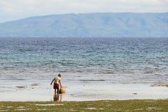 Den gamla kvinnan Collectin beskjuter och fångar krabbor på stranden i Bohol, Filippinerna Royaltyfri Bild