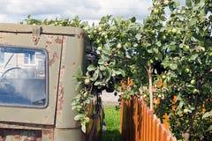 Den gamla och rostiga järnbilen, äpplen på träden trycker på maskinen Royaltyfri Fotografi