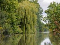 Den gamla pilen och andra träd nära bevattnar i Marais Poitevin som naturligt regionalt parkerar fotografering för bildbyråer