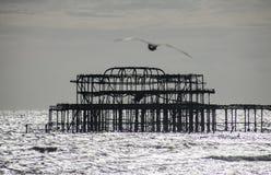 Den gamla pir i Brighton och seagullen Royaltyfria Foton