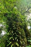 Den gamla skogen, den gröna tropiska skogen på den Doi Inthanon nationalparken, vertikal färg och myrasikten avbildar royaltyfri fotografi