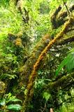 Den gamla skogen, den gröna tropiska skogen på den Doi Inthanon nationalparken, vertikal färg och myrasikten avbildar fotografering för bildbyråer