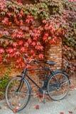 Den gamla svarta stads- cykeln står på en vägg för röd tegelsten och en röd höstmurgröna royaltyfri foto
