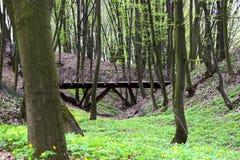 Den gamla träbron parkerar in Arkivbild