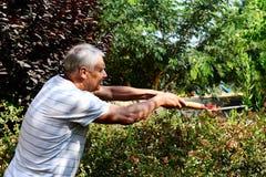 Den gamla trädgårdsmästaren arbetar i trädgården Arkivbilder