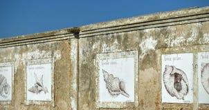 Den gamla väggen med ovannämnt skissar av snäckskal i Andalusia Spanien royaltyfri bild