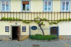 Den gamla vinrankan i Maribor Arkivbild