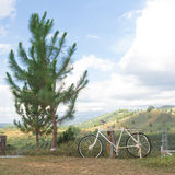 Den gamla vita cykeln i balkongsikt av det gröna berget med sörjer trädet royaltyfria foton