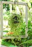 Den gamla vita ramen i trädgården med tappninglynne royaltyfri bild