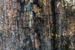 Den gamla wood texturen med naturliga modeller och sprickor på yttersidan som bakgrund Gör mörkare från mitt Royaltyfri Fotografi