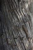 Den gammala treen Royaltyfri Bild