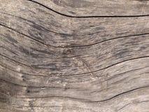 Den gammala treen texturerar Royaltyfri Bild