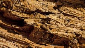 Den gammala treen texturerar Royaltyfri Fotografi