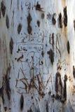 Den gammala treestammen med namnger och daterar etsat in arkivbild