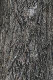 Den gammala Wood treen texturerar Arkivbilder