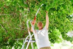 Den gammalare mannen klipper en treefilial Royaltyfri Fotografi