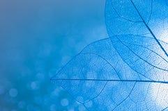 Den genomskinliga skelett- sidacloseupen av blått färgar med Boke Härlig konstnärlig bild Skelett- sidor Selektivt fokusera Arkivfoton