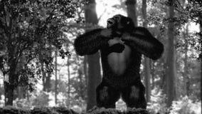 Den gigantiska gigantiska apan trummar på hans bröstkorg lager videofilmer