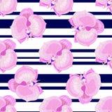 Den gjorde randig orkidén blommar på vit-svart Arkivfoto