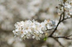 Den glade blomningen blommar på vårdag Arkivbilder