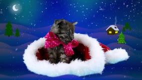 Den glade julkortet med text, den förtjusande härliga katten med rosa färger bugar lager videofilmer