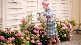 Den gladlynta caucasian unga kvinnan bevattnar blommor Utomhus sommartid Bevattna blomma vanliga hortensian från bevattna stock video