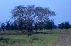 Den Gorongosa nationalparken, Mocambique Royaltyfri Fotografi