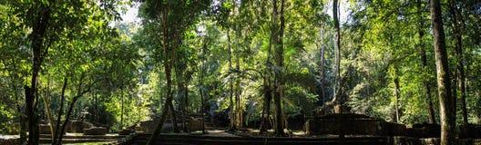 Den grävde panoramautsikten av halvan fördärvar, Palenque, Chiapas Fotografering för Bildbyråer