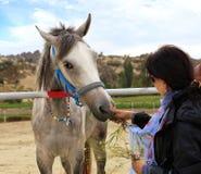Den gråa hästen med den blåa tygeln äter gräs från händerna av en ung kvinna royaltyfri foto