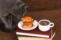 Den gråa katten luktar rullarna med vallmofrön nära kaffekoppen fotografering för bildbyråer