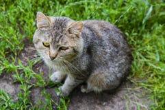 Den gråa katten sitter på en bakgrund av grönt gräs arkivfoton