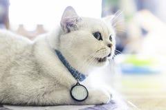 Den gråa katten sitter på golvet i fönsterrummet slapp fokus arkivbild