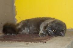 Den gråa kattungen, katten på ugnen ligger Royaltyfria Foton