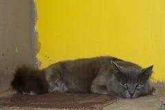 Den gråa kattungen, katten på ugnen ligger Arkivbild