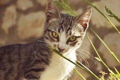 Den gråa lilla katten med stora gräsplan- och gulingögon luktar bladet av gr Royaltyfria Foton
