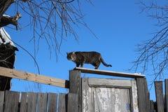 Den gråa randiga katten som sitter på ett gammalt staket av bräden, fjädrar royaltyfri fotografi