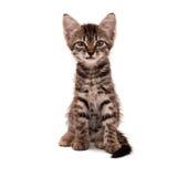 Den gråa randiga kattungen med ett skeptical grinar arkivfoto