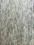 den gråa yttersidan av trästolpen royaltyfri bild