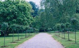 Den gröna avenyn går i parkera Royaltyfri Bild